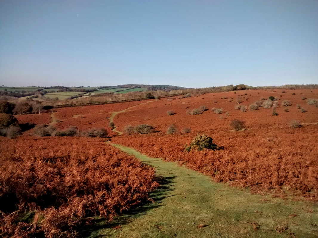 Autumn bracken on the moor